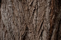 Old Wood Tree Texture Background Pattern Royalty Free Stock Photo