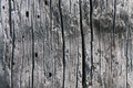 Old wood a well defined structure Stock Photography