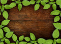 Old wooden background with green floral frame Royalty Free Stock Photos