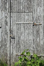 Old wooden barn door a closed overgrown Stock Photography