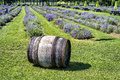 Old wooden barrel in a lavender field on sunny day Royalty Free Stock Photography