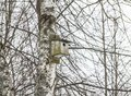 Old wooden birdhouse on a tree. On the background of branches