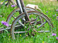 Old wooden cartwheel on the grass Stock Photo