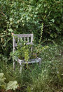 Old wooden chair in wild garden Stock Images