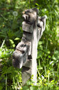 Old wooden crosse cross in an abandoned graveyard Stock Photos