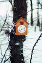 Old wooden cuckoo clock hanging on a tree Royalty Free Stock Photo