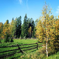 Old wooden fence around a horse grazing pasture. Royalty Free Stock Photo