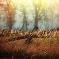 Old wooden fence on a blurred background of autumn forest Royalty Free Stock Image