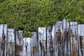 Old wooden fence in garden with tree Royalty Free Stock Photos