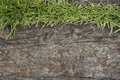 Old wooden sheets on grass Royalty Free Stock Photo