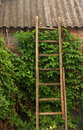 Old wooden stairs on brick wall overgrown with ivy Stock Image