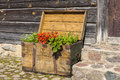Old wooden treasure chest filled with blooming flowers standing in front of an building Royalty Free Stock Photography