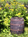 Old wooden wine cask at a farmhouse Stock Image