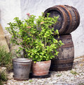 Old wooden wine cask at a farmhouse Stock Photography