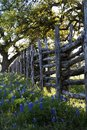 Old Wooden Fence and Bluebonnets on Willow City Loop Road, Texas