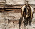 Old worn saddle odl hanging from an barn wall Stock Images