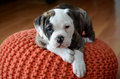 Olde english bulldog puppy laying on orange poof Royalty Free Stock Photos