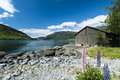 Olden fjord with boatshed landscape of and flowers in foreground Royalty Free Stock Photos