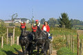 Older couple riding a horse and carriage netherlands province limburg near the village of epen driving man wife with their car Royalty Free Stock Image