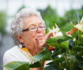 Older woman in her garden smelling the flowers Stock Photo
