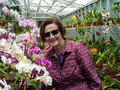 Older Women Gardener with Orchids Stock Image