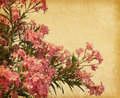 Oleander pink flowers of in retro style Stock Photo