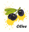 Olive background Royalty Free Stock Photo