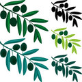 Olive branch Royalty Free Stock Photos