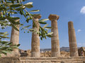 Olive Branch And Greek Column Royalty Free Stock Photo