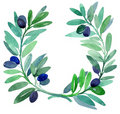 Olive branches. Stock Images