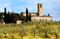 Olive Grove in Tuscany Stock Images