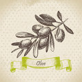 Olive retro background with hand drawn illustration Royalty Free Stock Photos