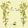 Olive's branches Royalty Free Stock Photo