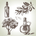 Olive set hand drawn retro illustrations Royalty Free Stock Photo