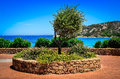 Olive tree in beautiful garden at ocean coast Royalty Free Stock Photo