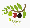 Olive tree branch with fruits symbolic illustration Royalty Free Stock Photo