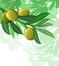 Olive tree holiday background Stock Image