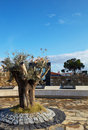 Olive Tree monument Royalty Free Stock Photography