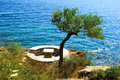 Olive tree near the sea Stock Photography