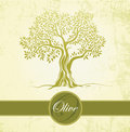 Olive tree olive oil vector olive tree on vintage paper for labels pack Royalty Free Stock Photography
