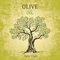 Olive tree olive oil vector olive tree on vintage paper for labels pack Royalty Free Stock Photo