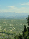 Olive tree plantation near Ubeda, Spain Royalty Free Stock Image
