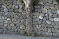Olive tree and stone wall Royalty Free Stock Photo