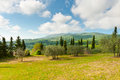 Olive trees farmhouse and on the slopes of the apennines italy Stock Photography