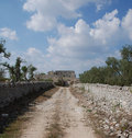 Olive Trees and Wall in Puglia Royalty Free Stock Images