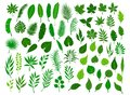 Ollection set of different green tropical, forest, park tree leaves branches twigs plants foliage