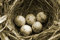 Olympic eggs - closeup of bird's-nest Royalty Free Stock Photo