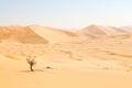 in oman old desert rub al khali the empty quarter and outdoor