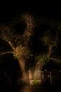 The�Ombalantu baobab tree in Namibia Royalty Free Stock Photo