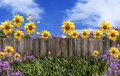 Omheining flowers blue sky Stock Foto